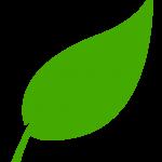 leaf-1 (1)